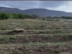 زمین  کشاورزی  ۱۰۰۰ متری دارای نهال بادام