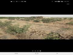 زمین کشاورزی  ۱۷۰۰۰ متری