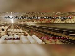 ۹۵ میلیون تخم مرغ نطفهدار برای تأمین نیاز بازار وارد میشود